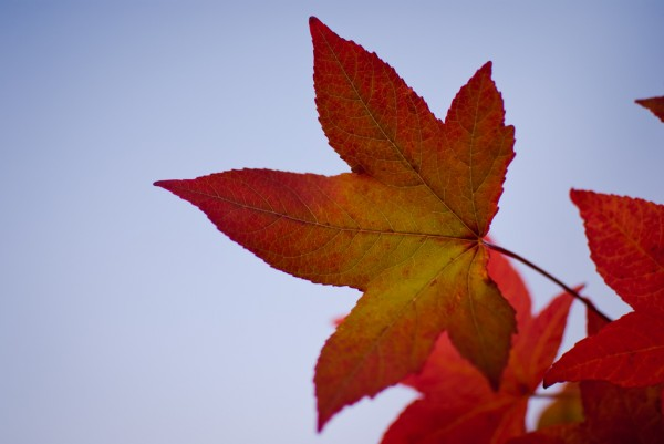 Fall leaf SteFou!/Flickr